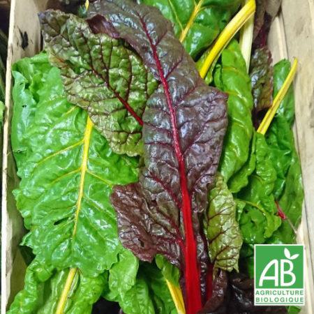 Légumes Permaculture